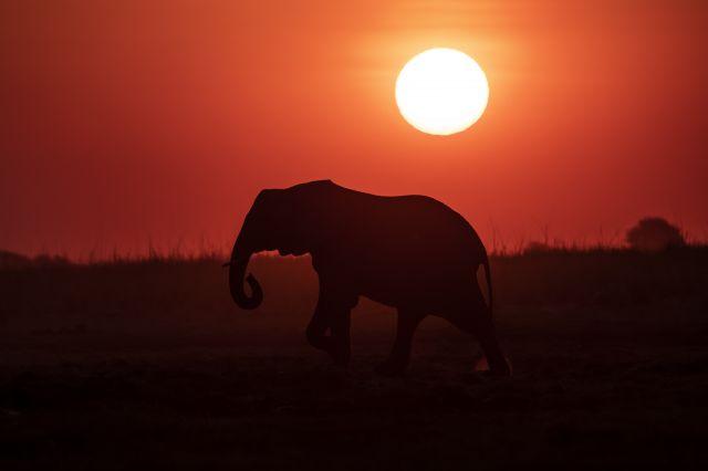 Namibia, Botswana, Zimbawe